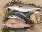 Seafood: poissons et crustacés japonais