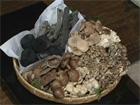 Les champignons :: cadeaux de la forêt japonaises